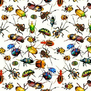 Beetles on white
