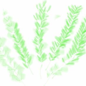 The Rosemary's wonders