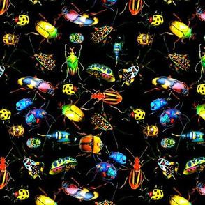 Beetles On Black