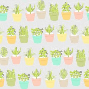 herbs in pastel pots