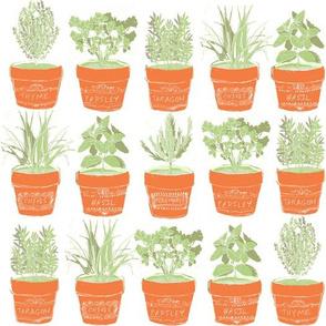 herbs in terra cotta pots