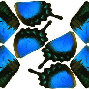 Blue Swallowtail Butterfly Costume Wings