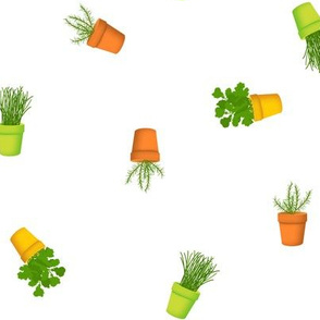 Peppy Potted Herbs