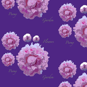 peony-dark lilac