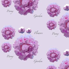peony-lilac