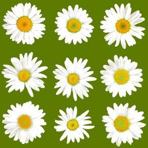 daisy dots on grass green