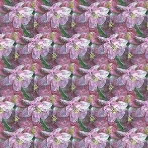 Small pink columbine