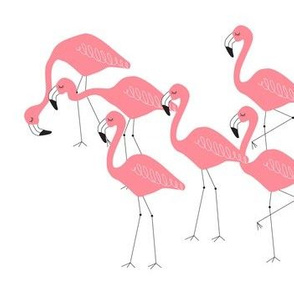 flamingo family group coral