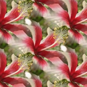 Hibiscus, tiled