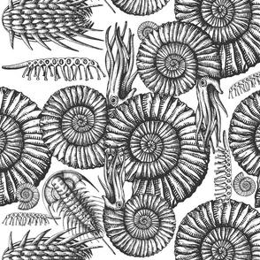 ammonite white and black