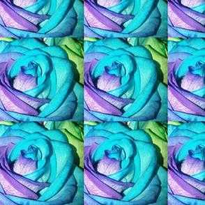 Tye Dye Rose