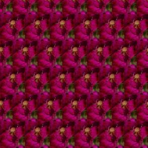 magenta pink geo spider
