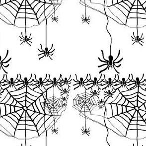 Spiders Galore!