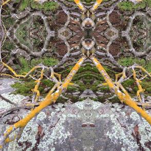 lichen | pacifica