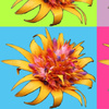 3406916-bromeliad-blocks-by-susiedeziner