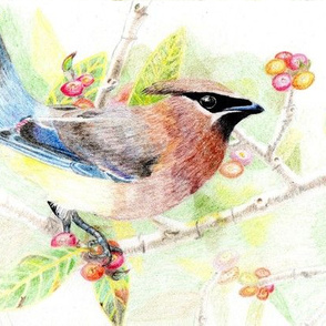 Cedar Waxwing, fat quarter and yard sizing