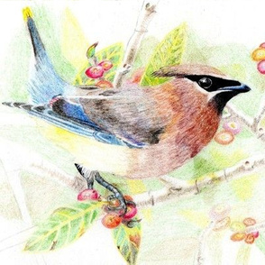 my drawing of a Cedar Waxwing- swatch sizing