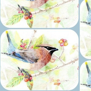 my drawing of a Cedar Waxwing- rounded, pale blue corners