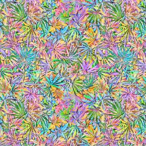 Cannabis Chaos