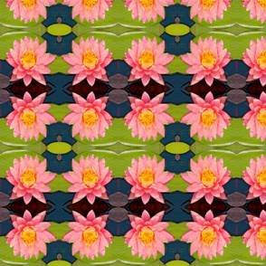 Large Pink Water Lilies 7798