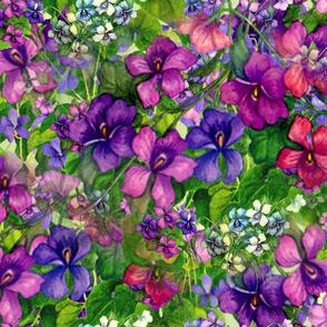 violets_4200_X_3150