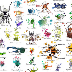 Julie's Beetles Collections