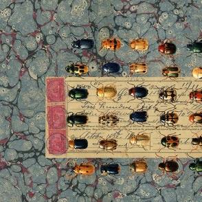 Blue marbled Beetles