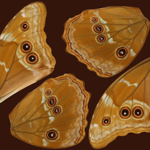 Oversized Morpho Butterfly Wings Part 1