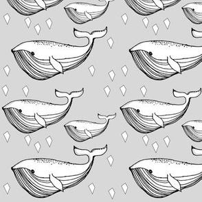 grey whale - elvelyckan