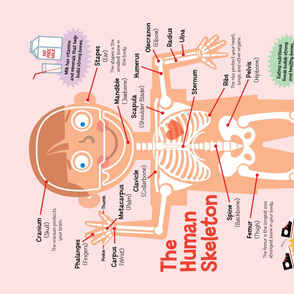 Skeleton Chart Wall Chart