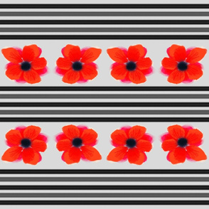 Poppy Patch 1