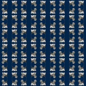 Cesky Terrier navy blue n grey