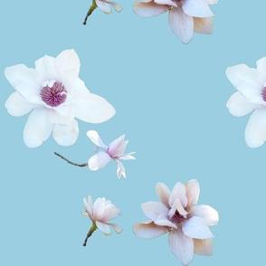 White Magnolias on Blue