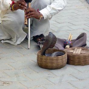 Snake Charmer in Rajasthan