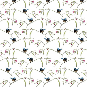 wren_and_flowering_gums