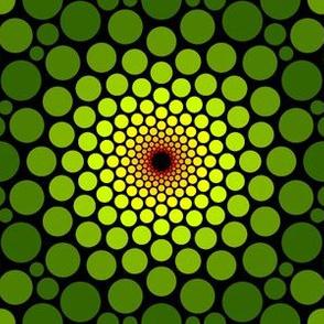 03504734 : eye of dragon : chameleon