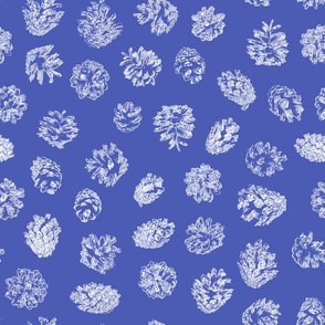 pine cones white on morning blue