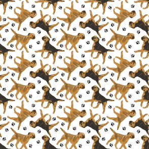 Trotting Border Terriers and paw prints - white