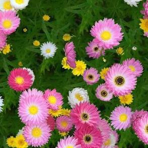 Max's Flowers