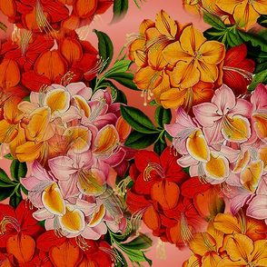flowers_red_pink_on_gradient_4200_X_3150