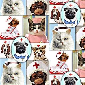 Veterinary  Nurses