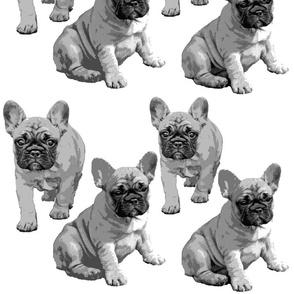 french bulldog puppy black white grey puppy