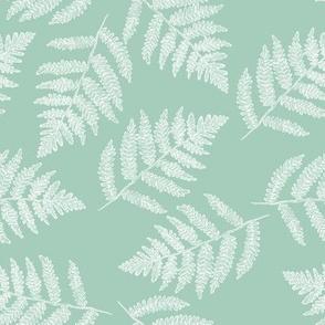 white ferns on spring green
