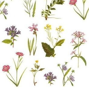 Antique Wildflowers on White