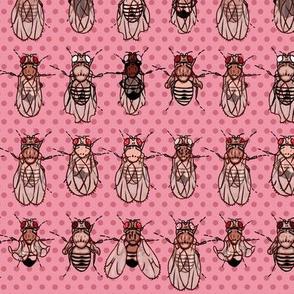 Drosophila Mutants Pink