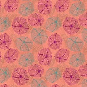 Physalis Phantastique - Coral