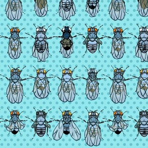 Drosophila Mutants Turquoise