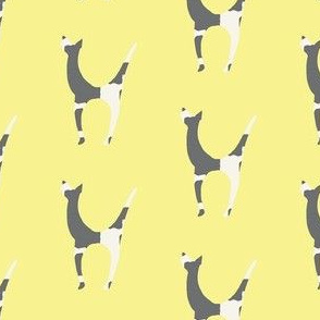 gray and white dog on pale yellow