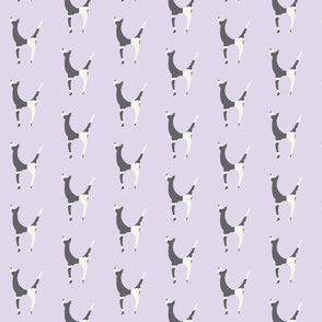 gray and white dog on lavender