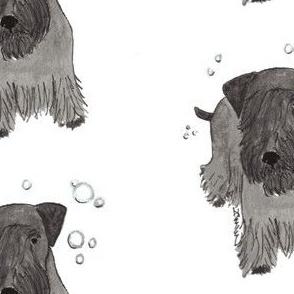Cesky Terrier and Bubbles